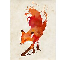 Vulpes Vulpes Photographic Print