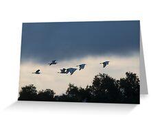 Evening Egrets Greeting Card