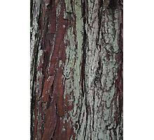 Bark Series - Stourhead #1 Photographic Print