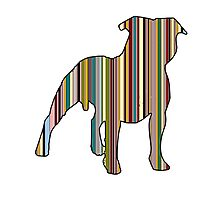 Staffordshire Bull Terrier Photographic Print