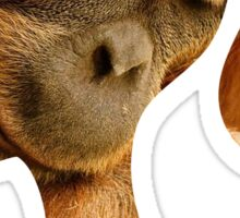 Orangutan Hides in Barbie Girl's Soul Sticker