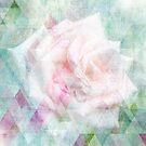 Triangle Rose - Dreiecks Rose Shabby Style by Martina Cross