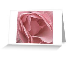 DUSKY PALE PINK ENGLISH ROSE Greeting Card