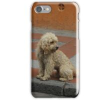 Stray Dog iPhone Case/Skin