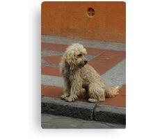 Stray Dog Canvas Print