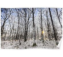 Sunrise Snow Forest Art Poster