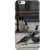 Cat amongst the pigeons iPhone Case/Skin