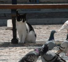 Cat amongst the pigeons Sticker