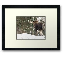 Bull moose in winter Framed Print