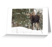 Bull moose in winter Greeting Card