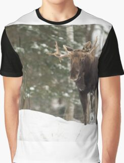 Bull moose in winter Graphic T-Shirt