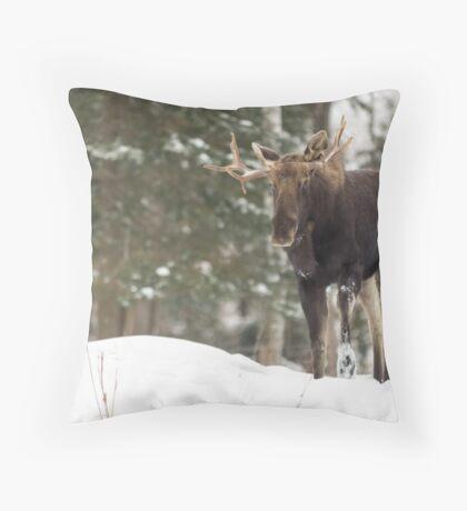 Bull moose in winter Throw Pillow