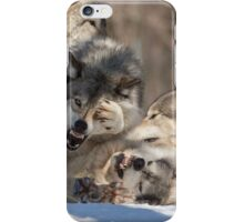 Timber wolves playing in winter iPhone Case/Skin