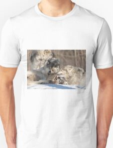 Timber wolves playing in winter T-Shirt