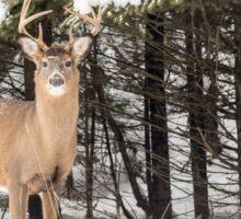 Deer in the snow woods Sticker