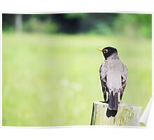 The Birds - robin on a fencepost (2012) Poster