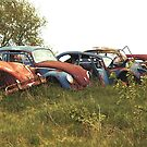 Automobile Graveyard No 11 by Barry W  King