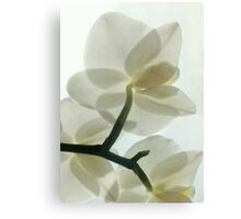 Translucent White Orchid in a Misty Dream Canvas Print