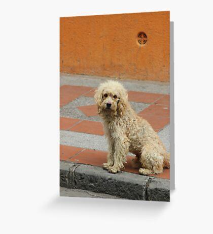 Stray Dog Greeting Card