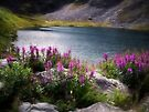 Fireweed and Water by Kathy Weaver
