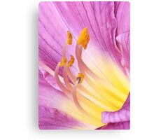 Magenta and Yellow Daylily Petals Canvas Print