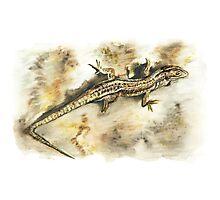 Brianag, the Ancient Lizard Photographic Print