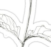 Sketched Floral - Begonia  Sticker