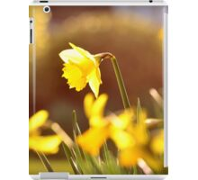 Daffodils of Spring iPad Case/Skin