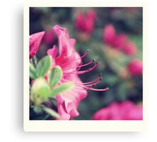 Azalea blow - two Canvas Print