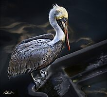 That's A Pelican, Right? by Ted Byrne