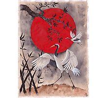 Japanese Crane Photographic Print