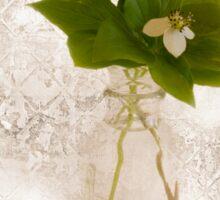 Still Life Of Dogwood - Bunch Berry Blossoms  Sticker