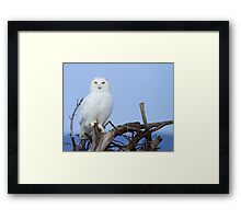 Posing for Playbird Framed Print