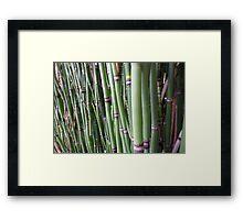 Los Angeles Bamboo stalks   Framed Print