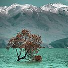 The Wanaka Tree ( 1a ) Aspects with a browning tree. by Larry Lingard-Davis