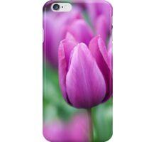 Purple tulips of Keukenhof iPhone Case/Skin