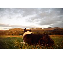 Indy at peace Photographic Print