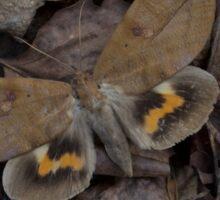 Dead Leaf Moth Sticker