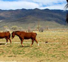Horses in Bishop, California Sticker