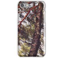Pine Tree Series IV iPhone Case/Skin