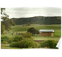 Joe Mortelliti Gallery - Grazing cattle, Rowsley valley, near Bacchus Marsh, Victoria, Australia. Poster
