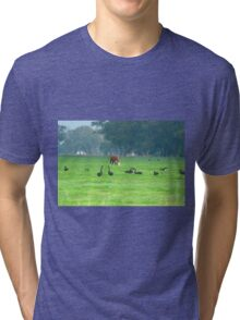 Cattle and swans Tri-blend T-Shirt