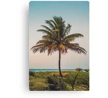 A lonely windy palmtree Canvas Print