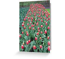 Two-Tone Tulips - Keukenhof Gardens Greeting Card
