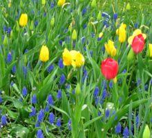 Dance of the Flowers - Keukenhof Gardens Sticker