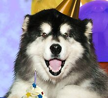 Birthday Malamute by jkartlife