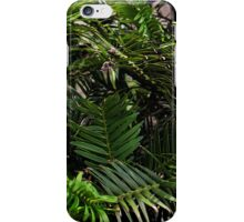 Wollemi Pine, the 'living fossil' tree of Australia iPhone Case/Skin