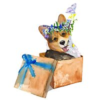 Dog in a box.  Photographic Print
