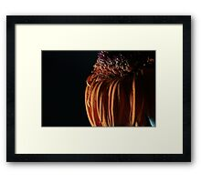 withered flowers gerbera on a black Framed Print