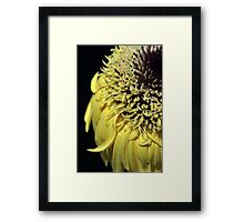yellow gerbera on black Framed Print